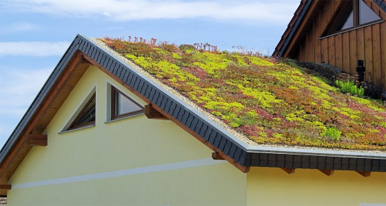 Green-Roofing-Systems-multiple-purposes