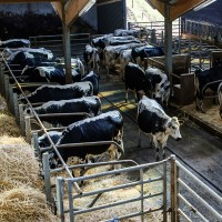 SureMountain-Agricultural-Insulation-Livestock