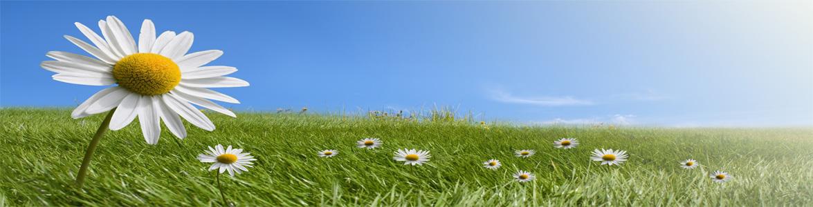 Environmental-Approach-SureMountain-Construction-Property-Maintenance-and-energy-saving